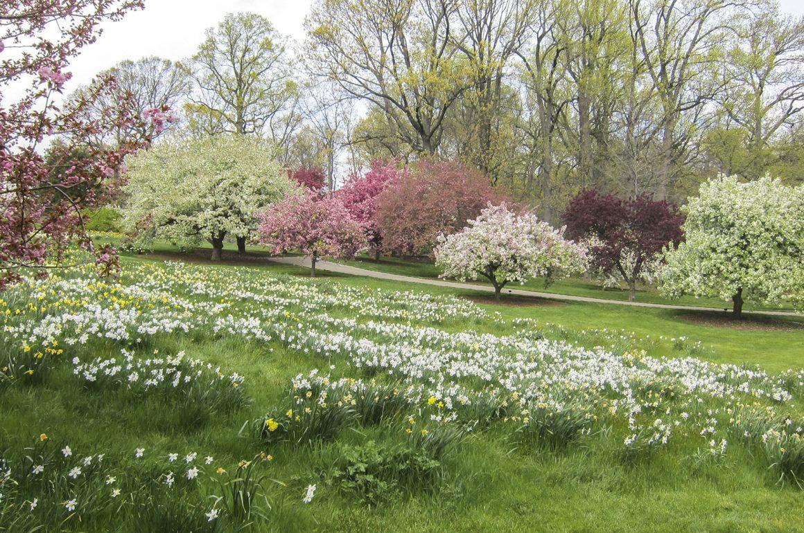 Great Spring Gardens